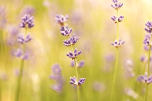 flower_and_blurred_background_206798