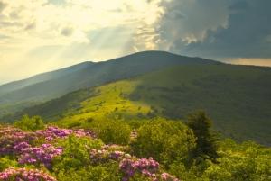 Appalachian Trail Roan Mountains Rhododendron Bloom on Blue Ridge Peaks