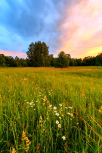 Meadow on a sunset
